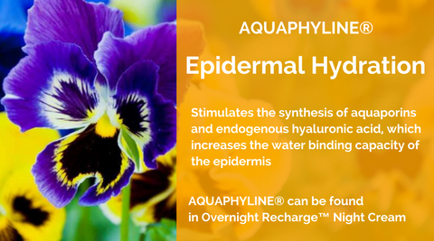 MERUMAYA-AQUAPHYLINE-epidermal-hydration-skincare-ingredient