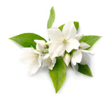 Jasmine, med i Signature Essence Blend