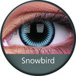 Phantasee Crazy Lens Blue Snowbird-UNIQSO