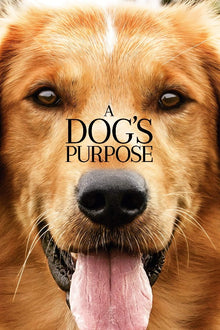 A Dog's Purpose - HD (I-Tunes)