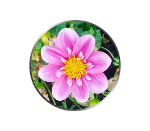 Pink Mini Dahlia Flower Ball Marker