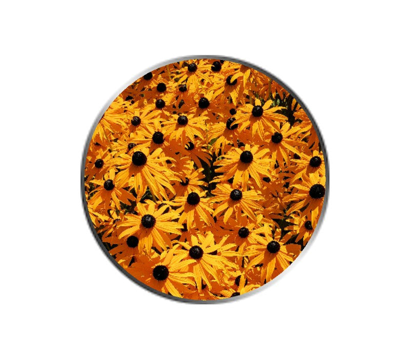 Black-Eyed Susan Flowers Ball Marker