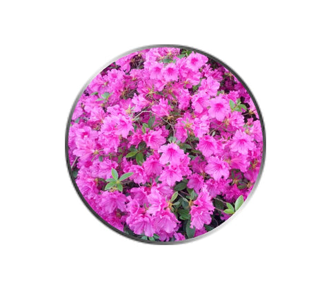 Pink Azalea Flower Ball Marker