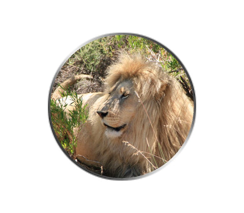 African Lion Ball Marker
