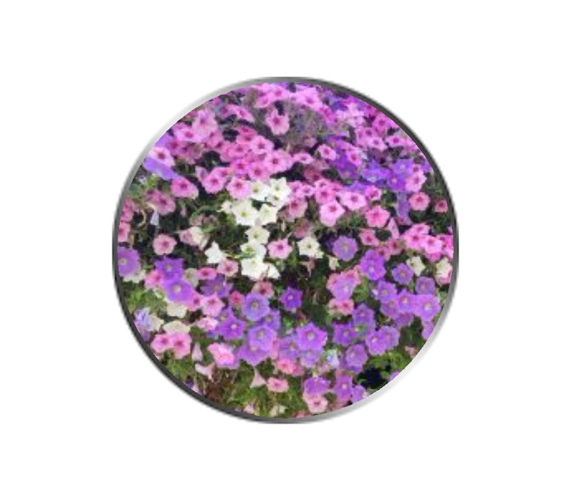 Pink and Purple Flowers Ball Marker