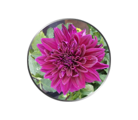 Purple Dahlia Flower Ball Marker