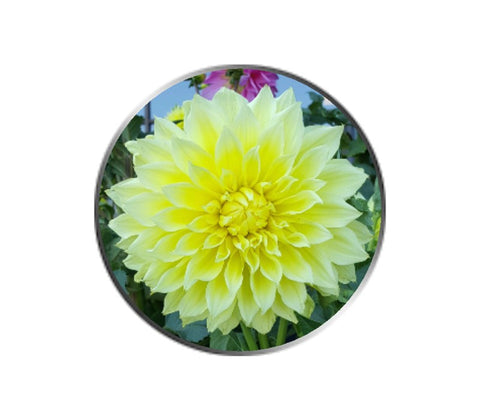 Yellow Dahlia Flower Ball Marker