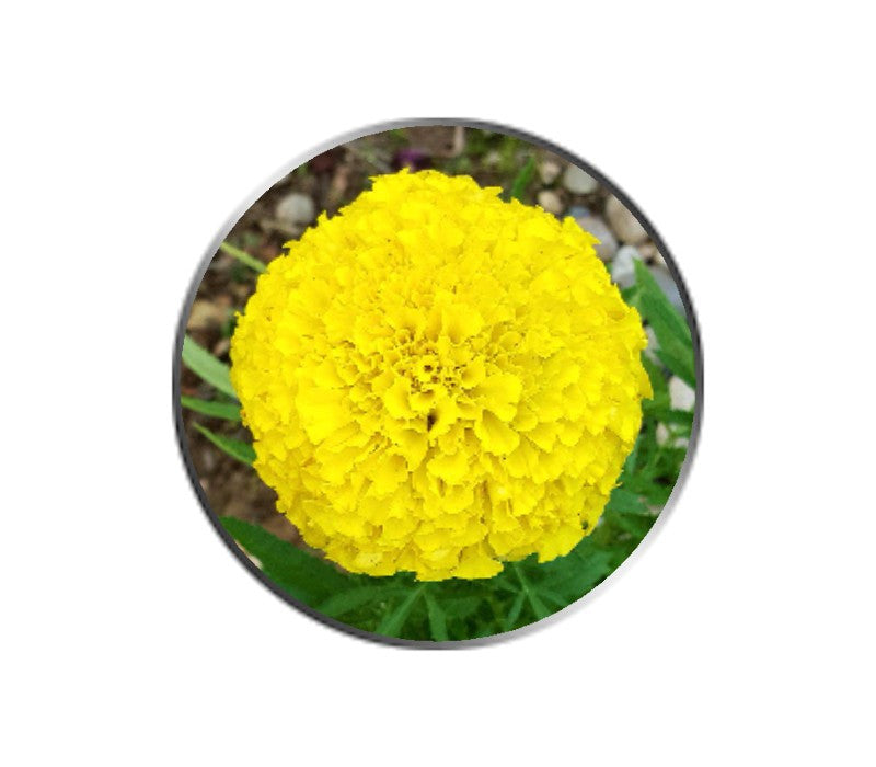Yellow Marigold Flower Ball Marker