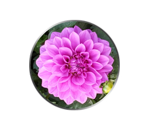 Pink Dahlia Flower Ball Marker