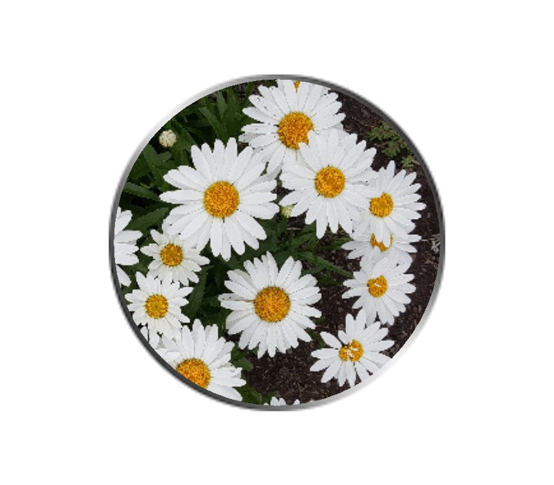 Daisies Flower Ball Marker