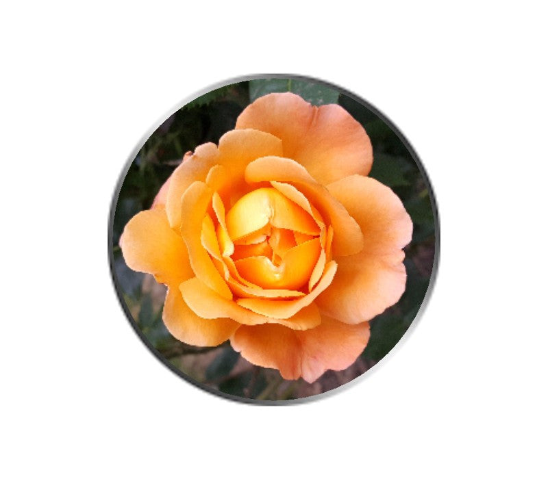 Orange Rose Flower Ball Marker