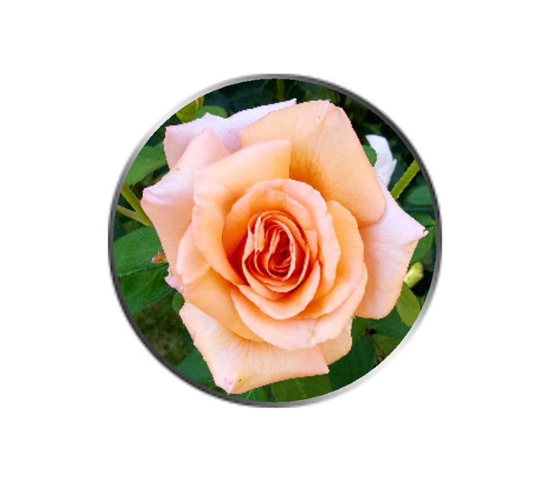Peach Rose Flower Ball Marker