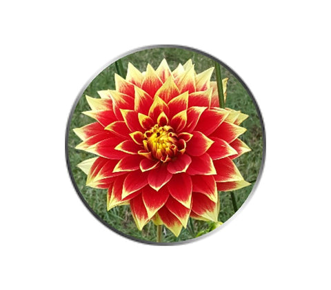 Red Dahlia Flower Ball Marker