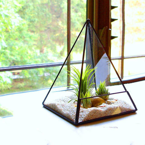 The Pyramid Terrarium - The Moonlight Society