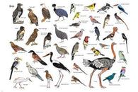 NATURE RESERVE BIRDS OF MAREMANI SOUTH AFRICA POSTER 24X36 EDUCATIONAL FUN