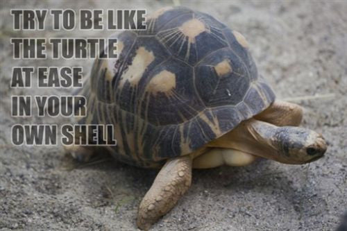 AFRICAN TURTLE Inspirational Quote POSTER 24X36 At Ease in your own Shell