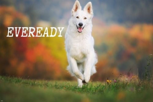 funny eveready dog ANIMAL LOVER POSTER 24X36 INSPIRATIONAL friendly pet
