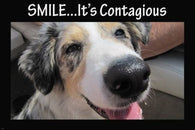 big nose doggie smilin' cute funny poster 24X36 ANIMAL LOVERS KID FRIENDLY