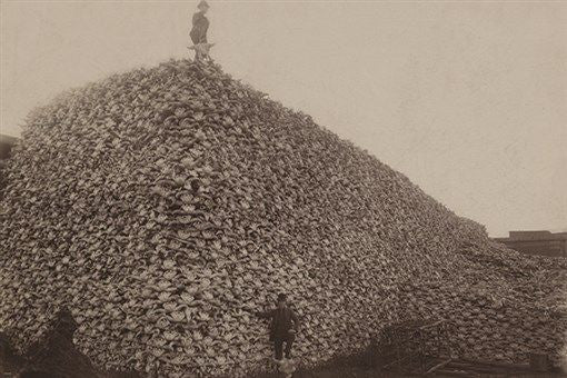 BISON SKULL PILE vintage photo poster HISTORIC UNITED STATES animal 24X36