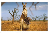 KANGAROO CARRYING BABY HIPPO poster 24X36 cute funny animal lovers rare