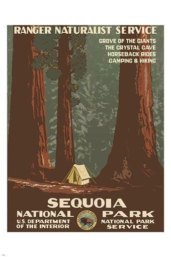 SEQUOIA NATIONAL PARK vintage nature poster 1938 RANGER NATURALIST 24X36 new