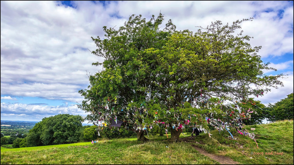 Wishing Tree of Tara Hill
