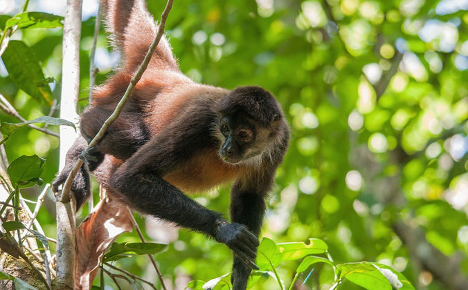 Endangered Species of the Rainforest | One Million Acres