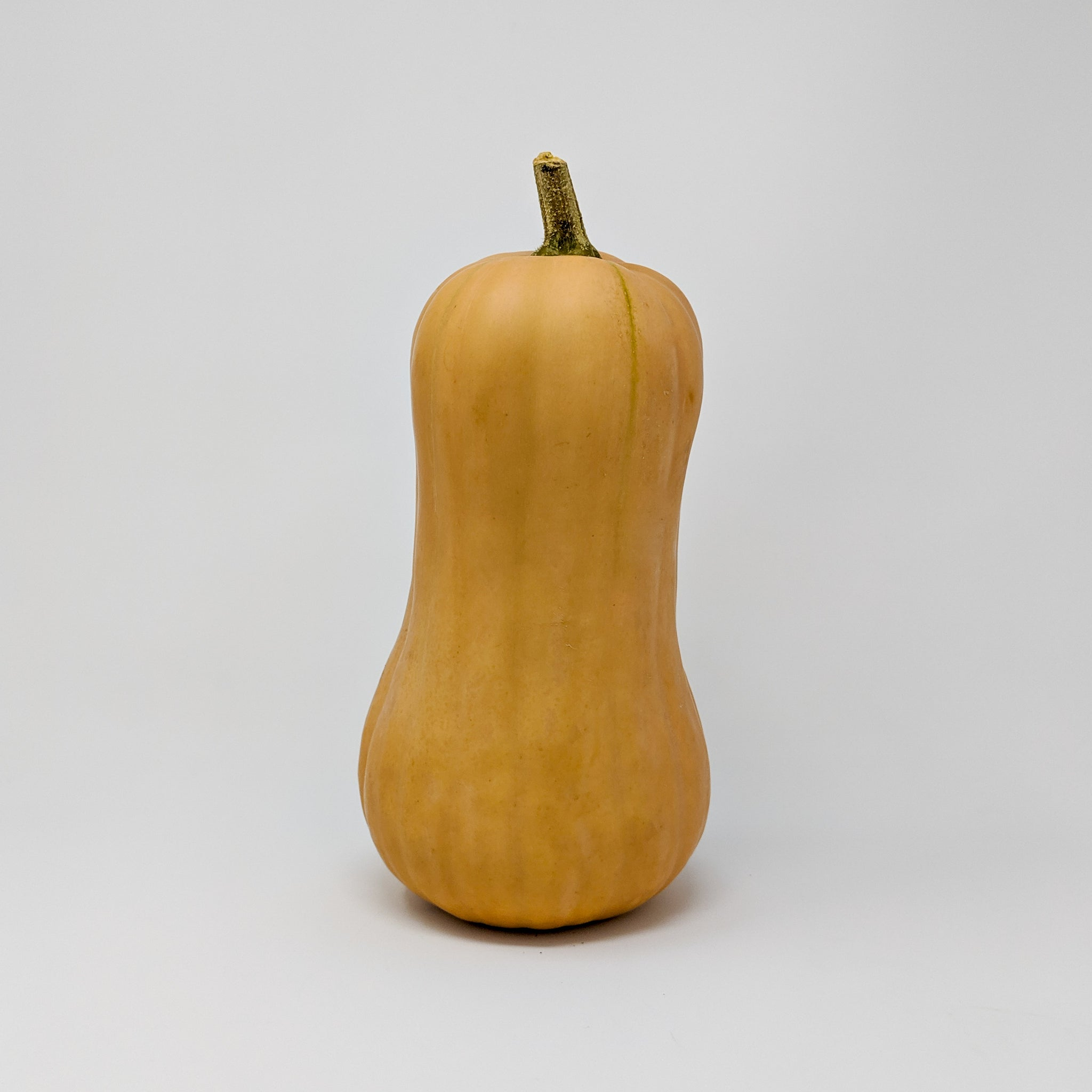 Butternut Squash - Manitoba Grown