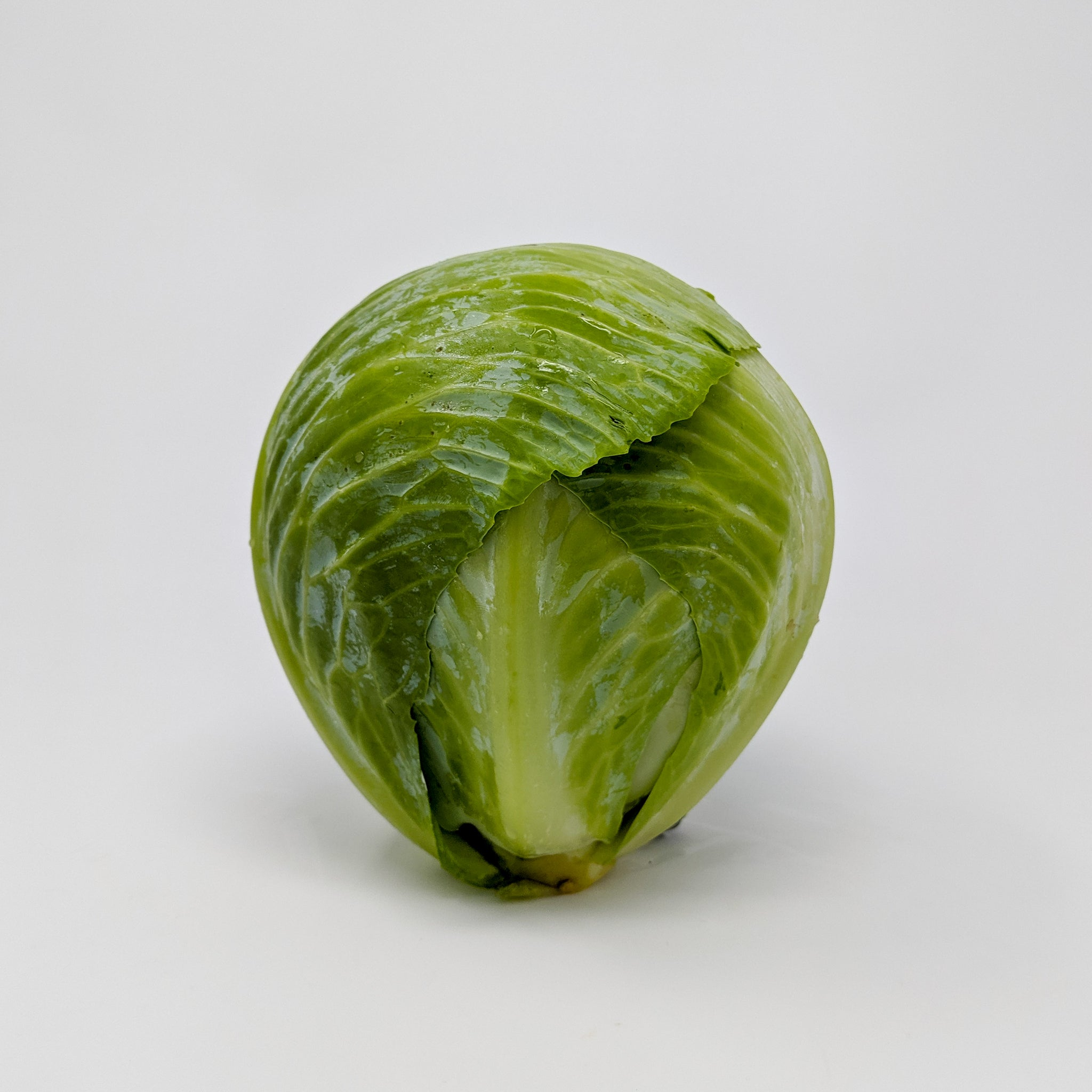 Green Cabbage Head - Locally Grown
