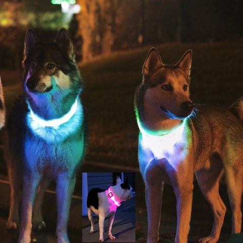 Meilleur collier led lumineux de protection chien ou chat-Passion's Store