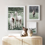 Load image into Gallery viewer, Alpaca Llama Sheep Poster Painting Wall Picture