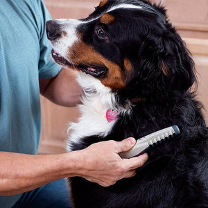 Electric Pet Grooming Comb Pet InspirExpress