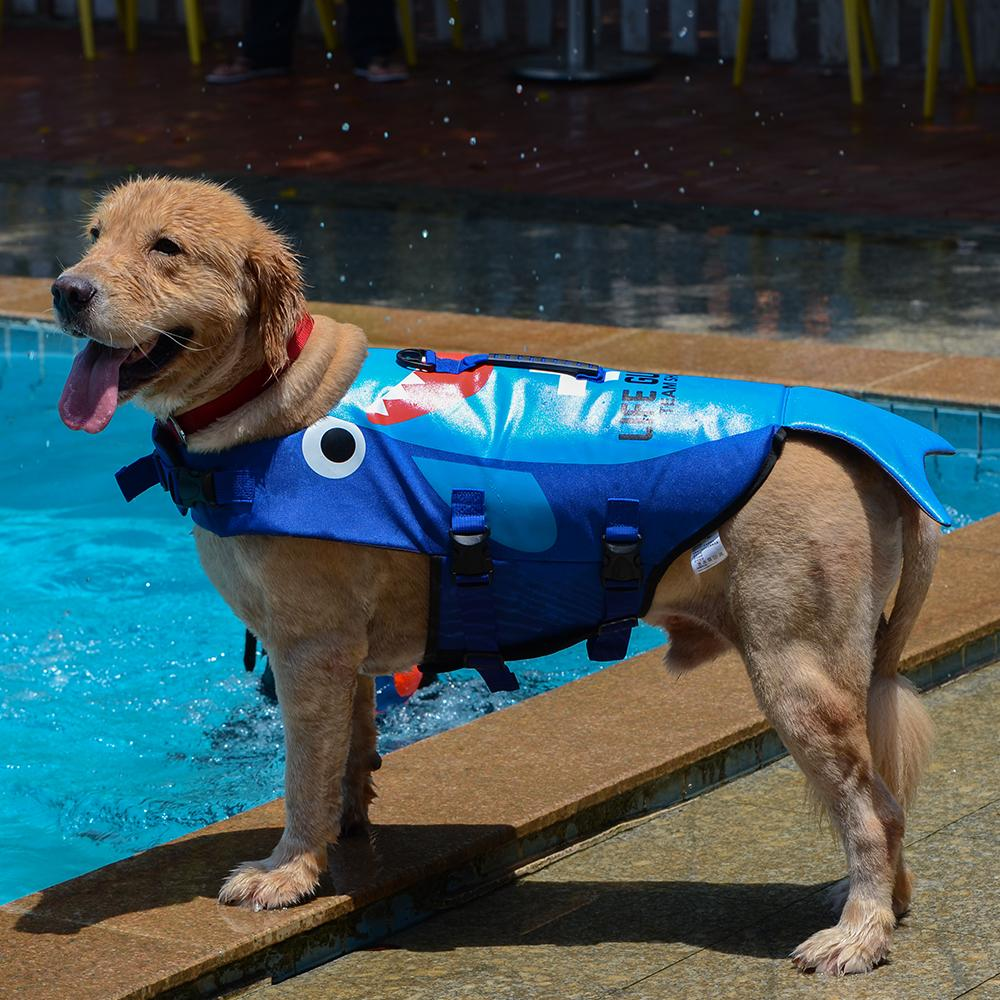 Shark Life Vest For Dogs Pet InspirExpress Cartoon Shark S