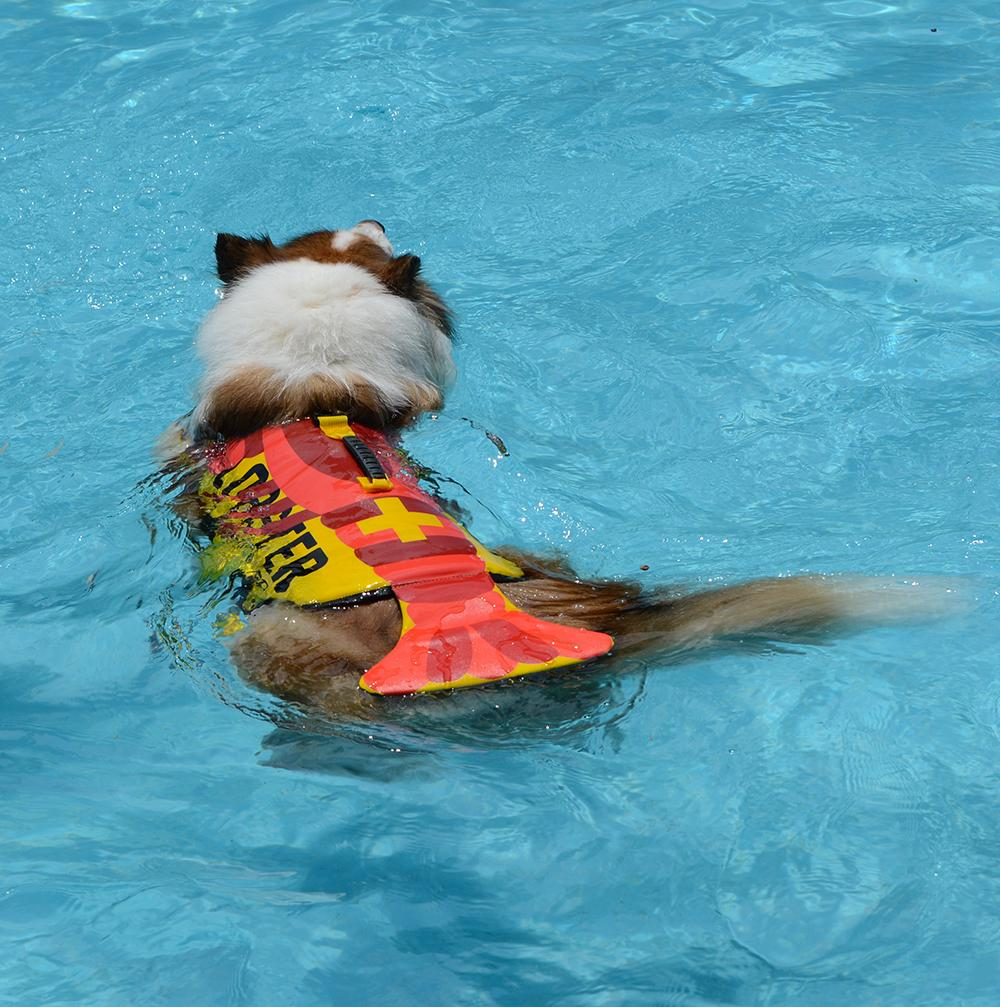 Shark Life Vest For Dogs Pet InspirExpress Lobster S