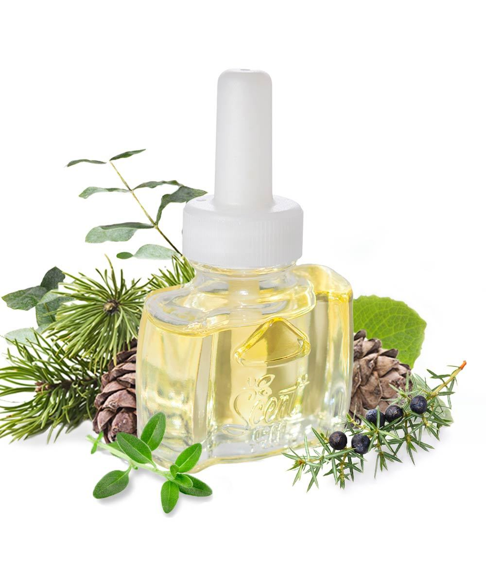 Fir Pine and Sycamore Scented Oil Refill for Glade Plugin Air Wick Plug in. Christmas tree scent