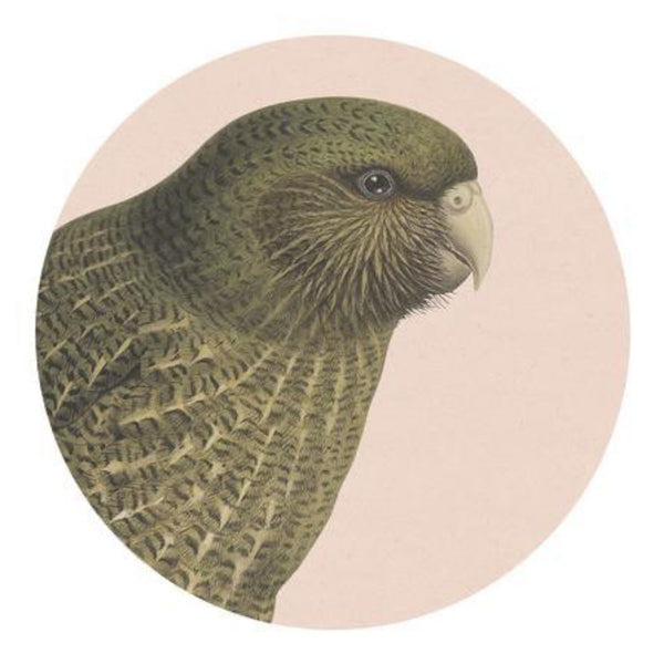 jade kiwi kaikoura gifts native bird placemat kakapo