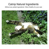 Natural Catnip Treat Pods They come as a set of two pods Give your cat the purrrfect treat vet treats taste sensation sealed seal pur pod play petting pets pet care perfect paws natural love limit lick intake home healthy health happy hair balls hair furry fun food feline enjoy cats catnips catnip cat care animals