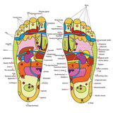 Magnetic Reflexology Therapy Insoles These magnetic insoles stimulate pressure points on the sole of the foot Therapy shoes shoe relief relexology RELAXING relaxes relax pairs pair painfree pain relief pain Pads Padded Pad Massaging massagers massager Massage Magnets magnetic Magnet insoles insole Gel foot soles foot feetcare feet acupressures acupressure