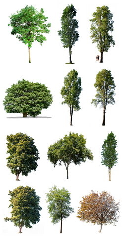 Cutout photos pack, with 12 large trees png images files