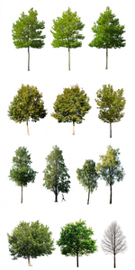 12 MEDIUM SIZE TREES PACK - cutout trees
