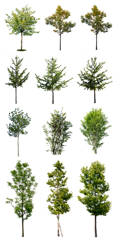 Cutout photos pack- 12 PNG with small trees images