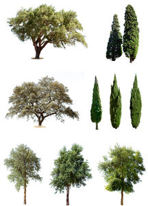 9 MEDITERRANEAN TREES PACK 1 - cutout trees