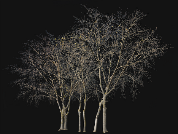 Deciduous-trees-Group-Winter-II - cutout trees