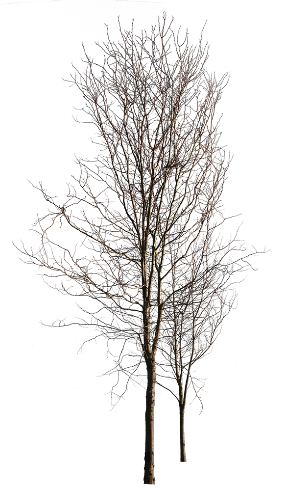 Deciduous-trees-Group-Winter - cutout trees