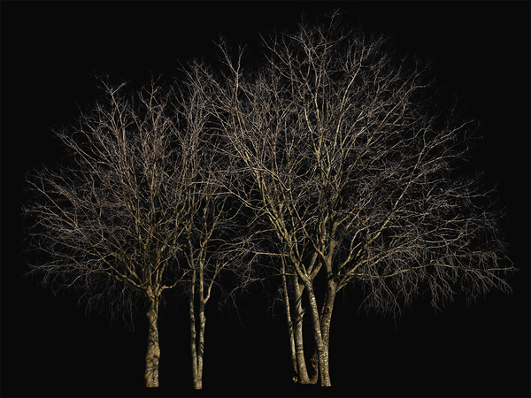 Deciduous-trees-Group-Winter-IV - cutout trees