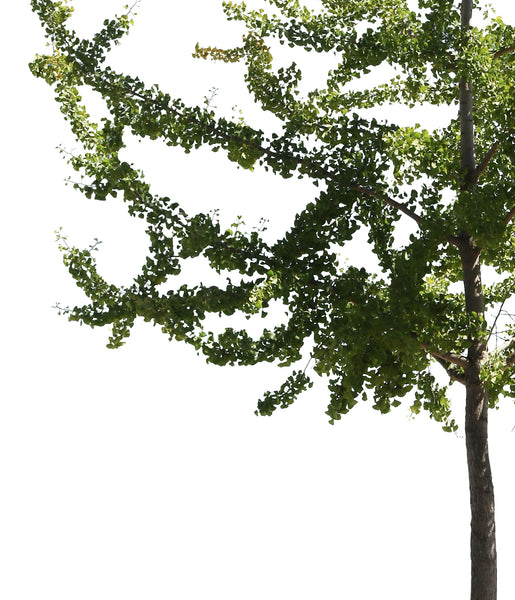 12 SMALL SIZE TREES PACK - cutout trees