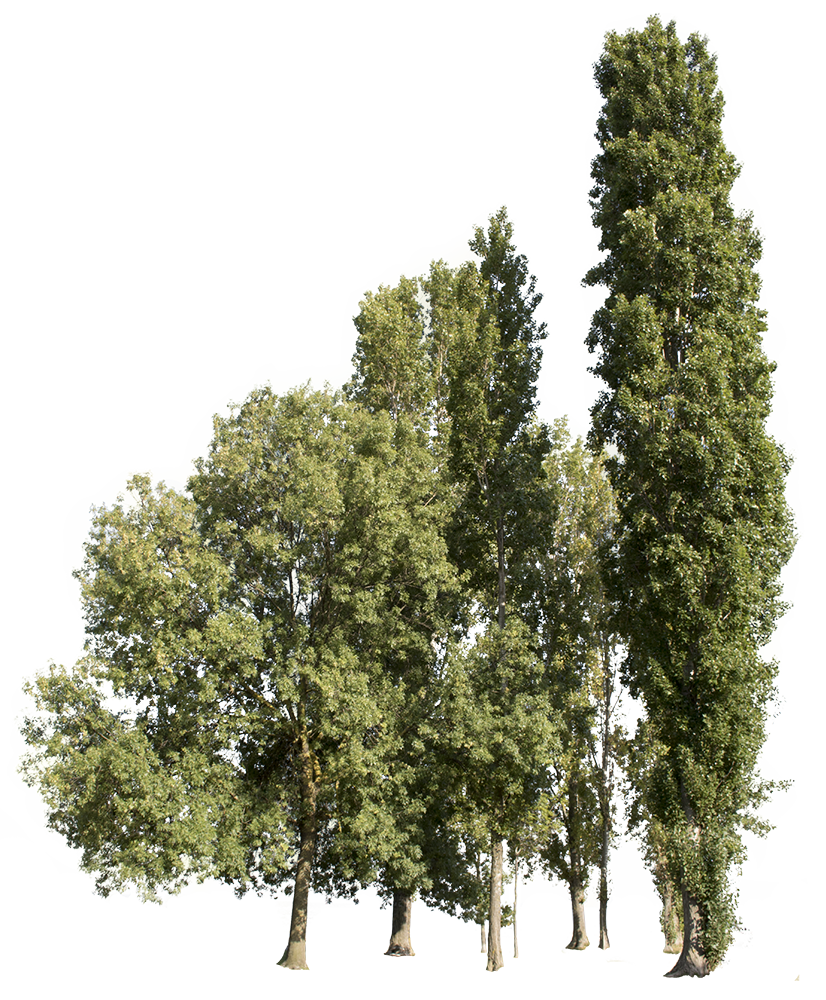Trees Group - cutout trees