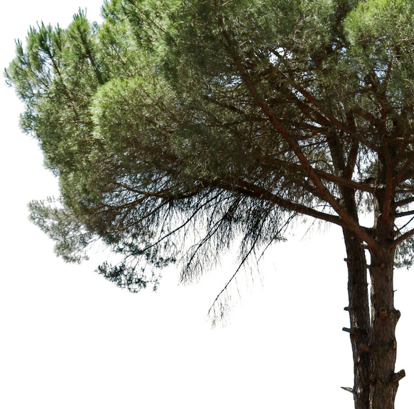 9 MEDITERRANEAN TREES PACK 2 - cutout trees