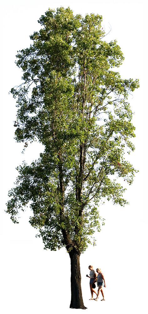 Populus nigra + People II - cutout trees
