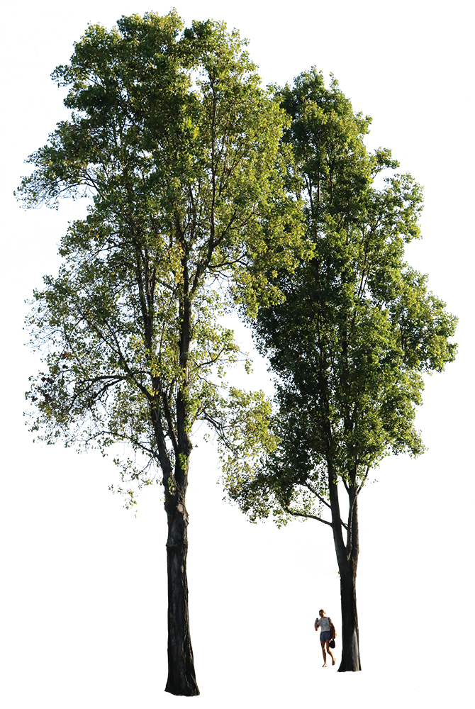 Populus nigra Group + People - cutout trees
